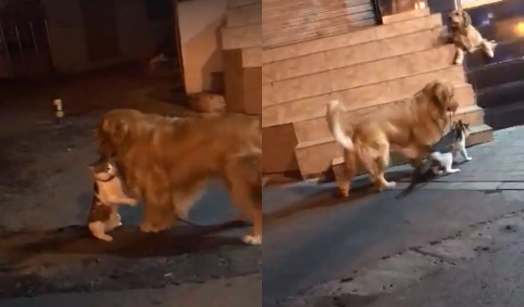 Perro evitó una pelea de dos gatos y se volvió viral