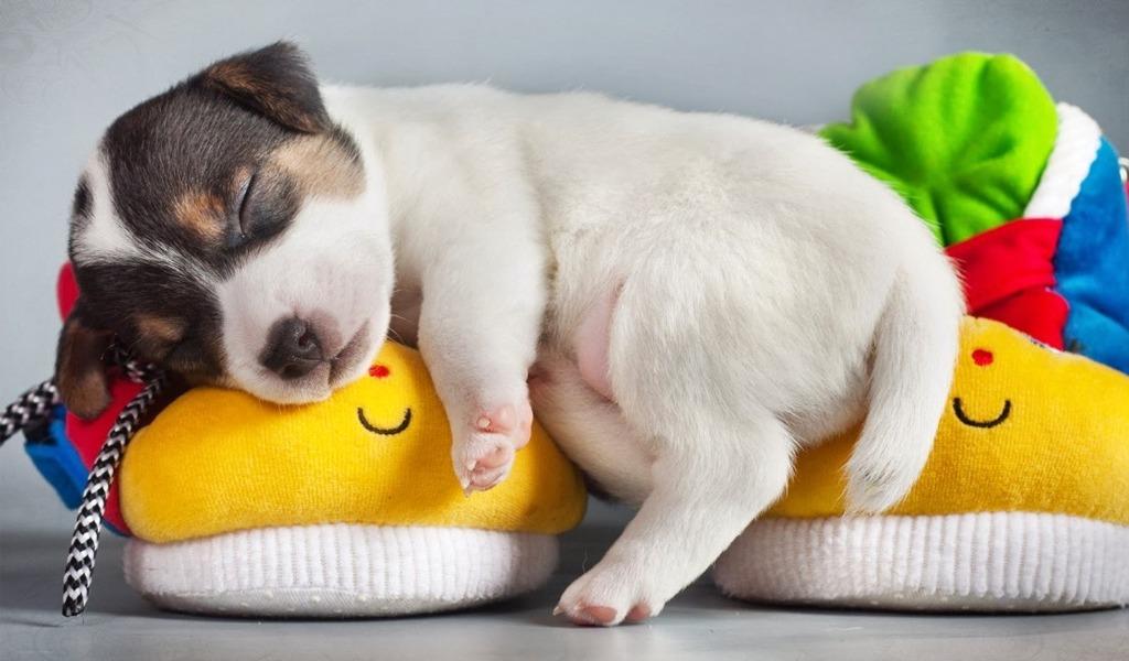 Esto es lo que sueñan los perros cuando duermen
