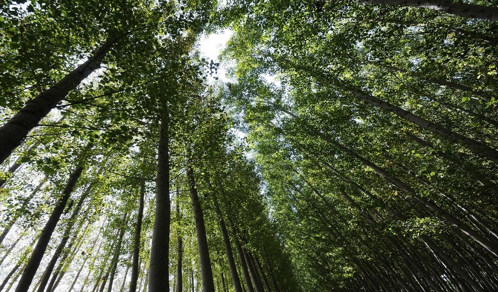 Así descontaminan el aire los árboles