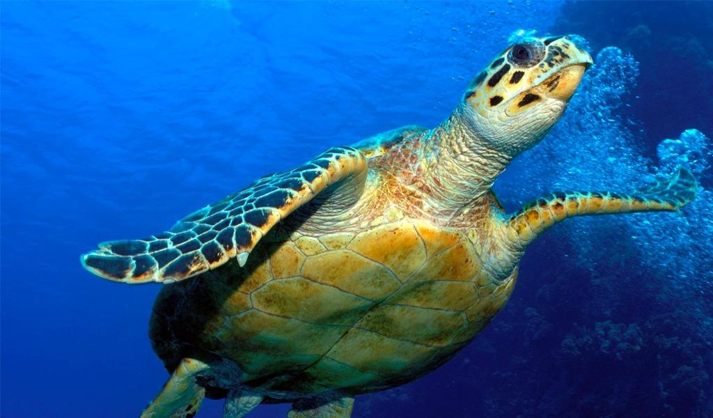 El grave problema que traería la extinción de las tortugas
