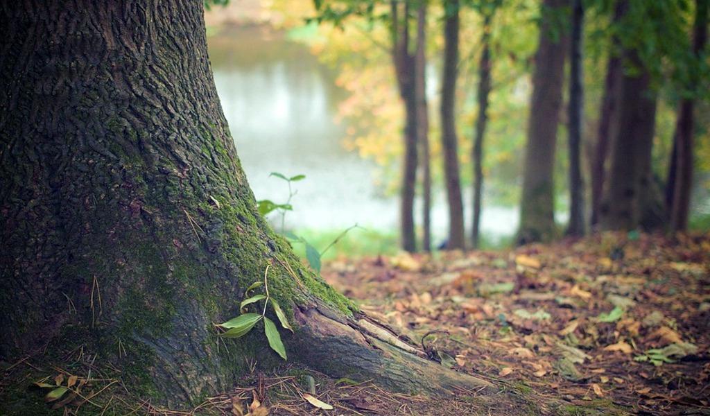 Colombia ratifica acuerdos de cooperación ambiental