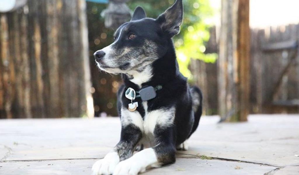 Collar inteligente para medir actividad de mascotas