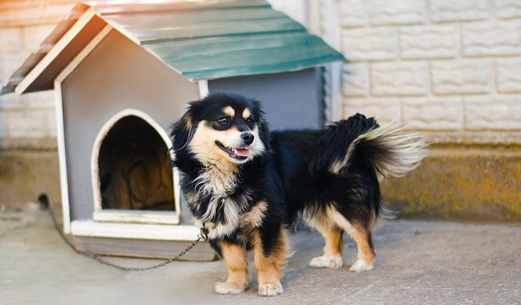 ¿Qué debe tener la casa de su mascota?