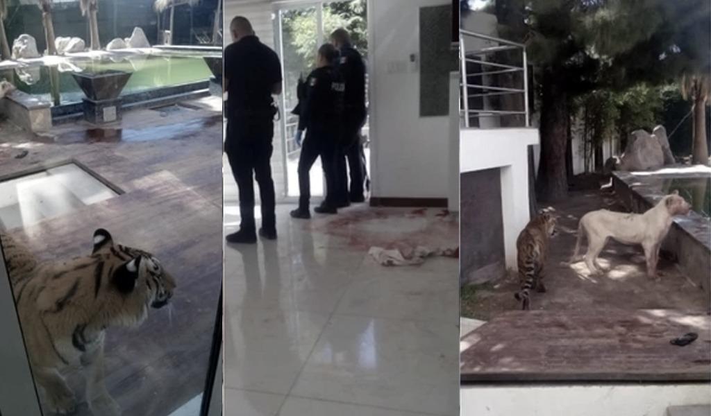 Hombre fue atacado por su mascota: una leona