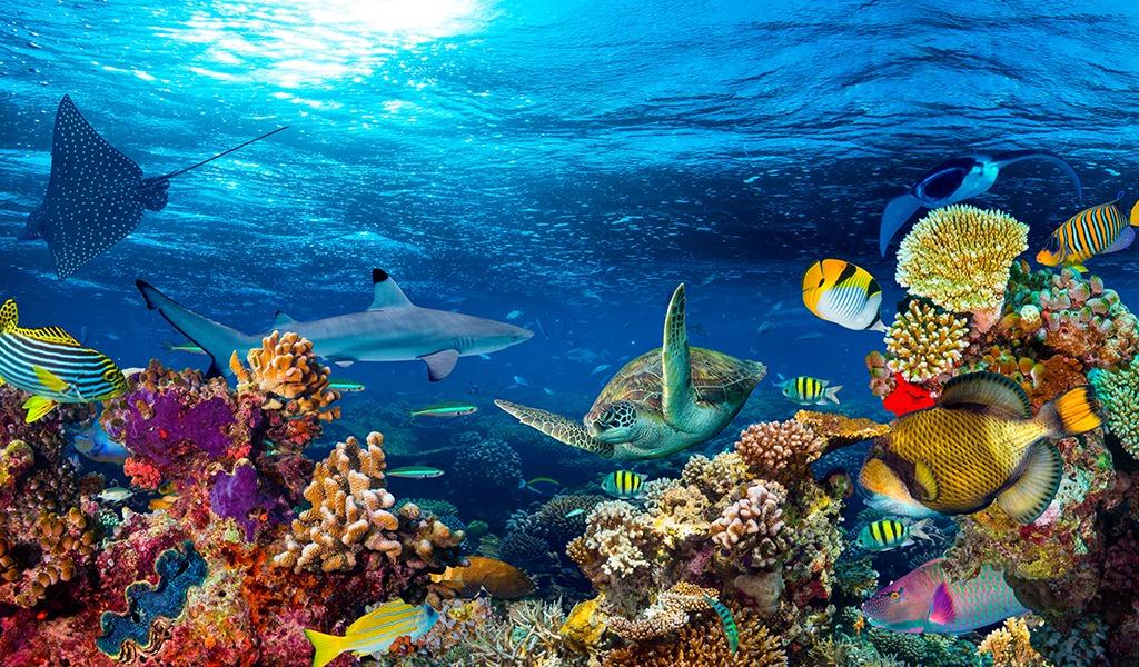 La importancia de los ecosistemas acuáticos en el mundo