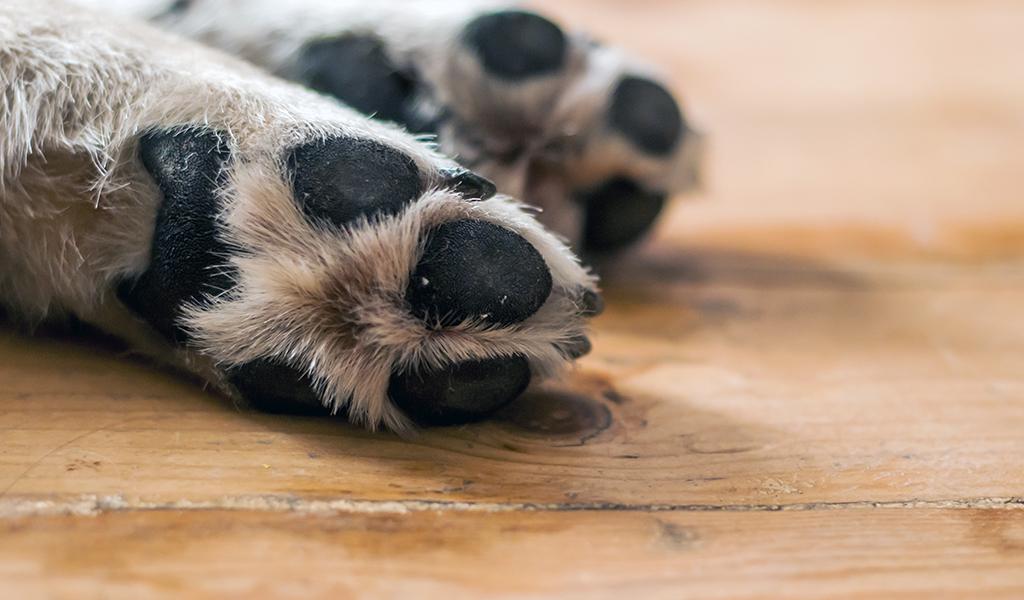 Las patas de los perros indican emociones