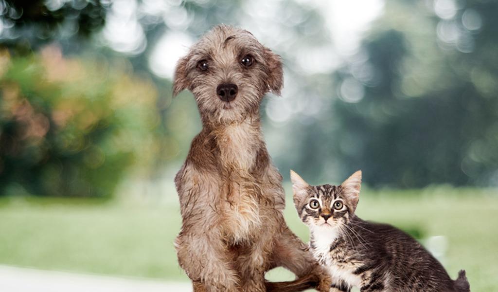 Así se celebra el Día Mundial de los Animales