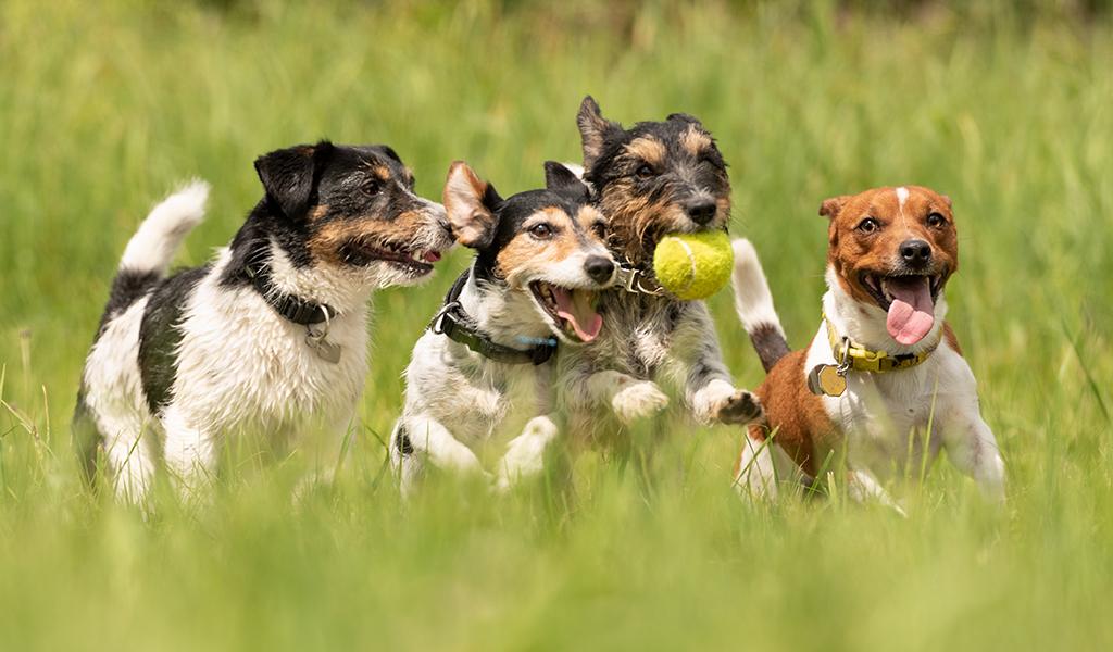 ¿Es falso que existen perros hipoalergénicos?