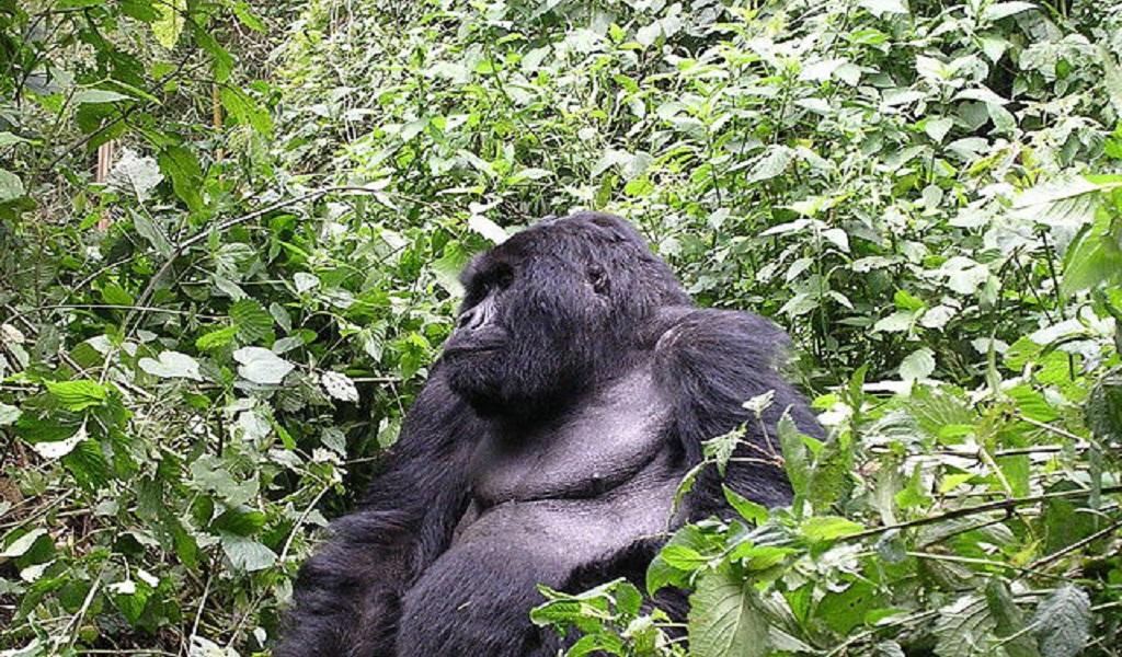 Los animales que salieron de peligro de extinción