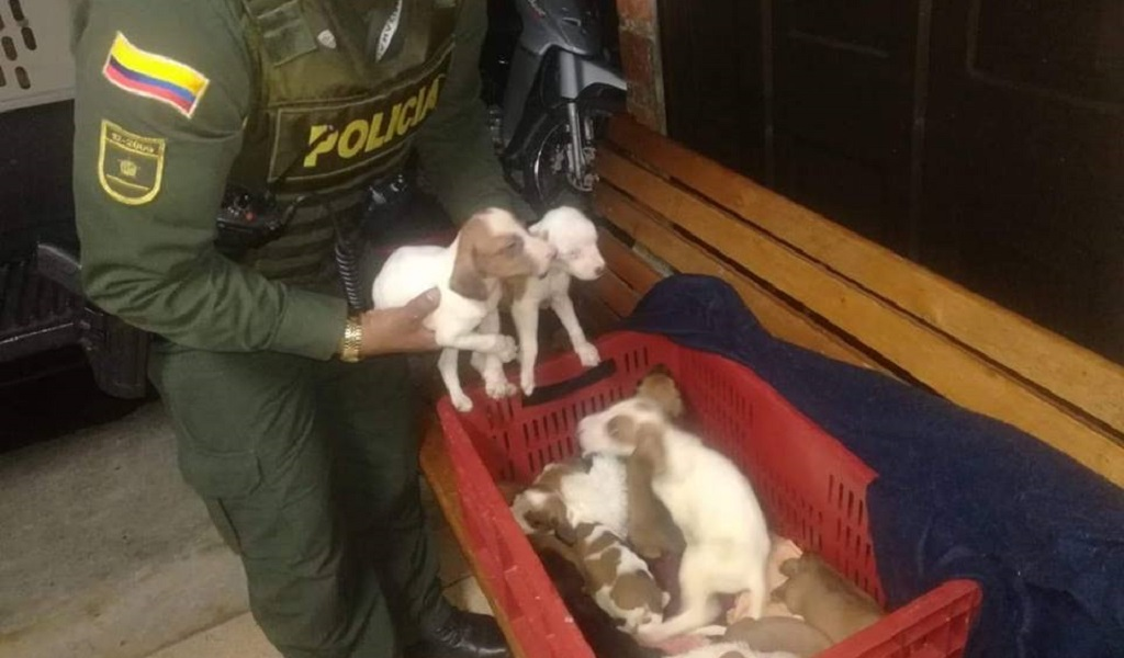 Autoridades rescataron animales que eran maltratados en Medellín