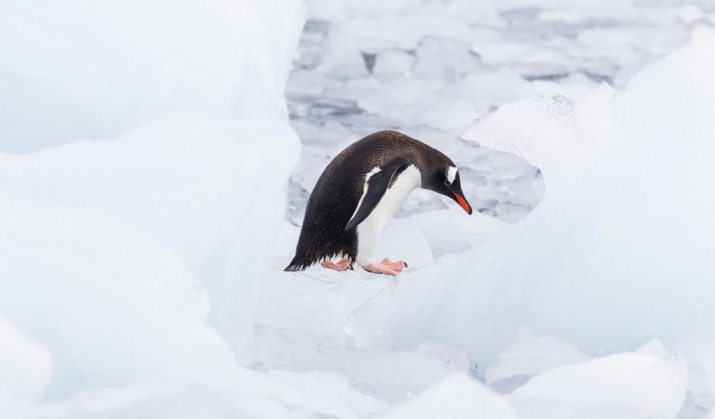 """La Ccrvma le da la espalda a la Antártida"": Greenpeace"