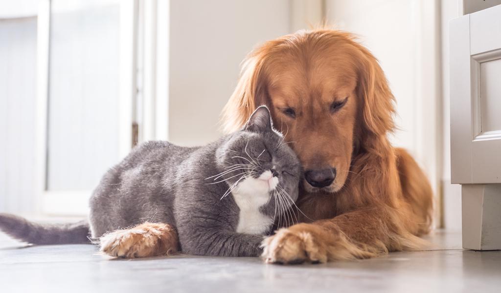 Por esto es que los perros son más sociales que los gatos