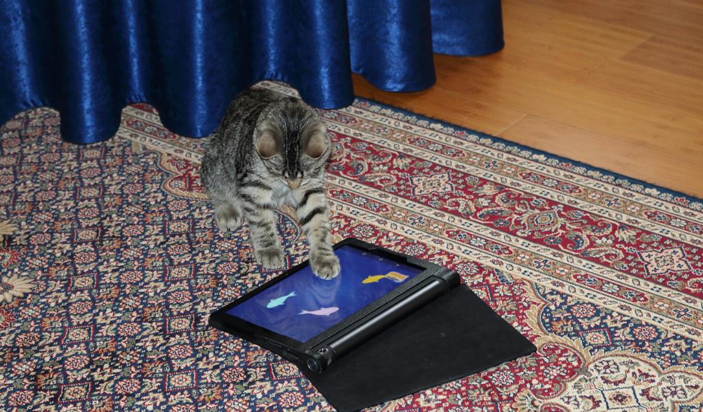 Conozca los juguetes inteligentes para gatos