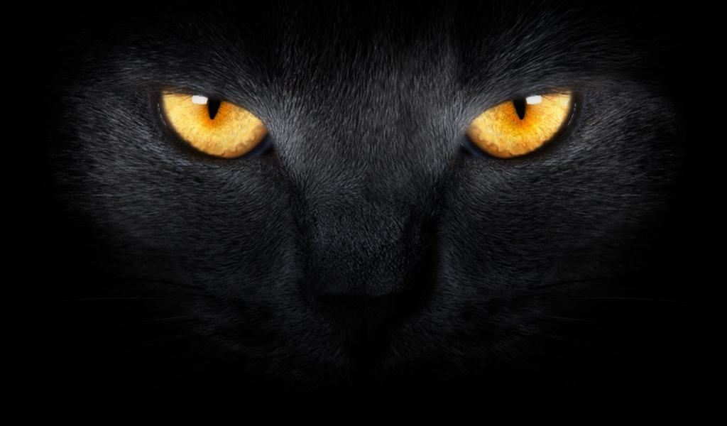 ¿Por qué le brillan los ojos a los gatos en la oscuridad?