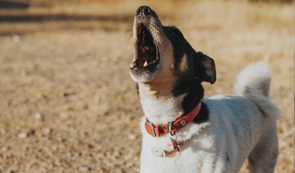 ¿Qué hacer para prevenir los malos actos en su perro?