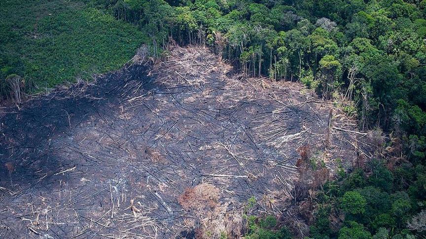 Deforestación en la Amazonía brasileña es la mayor de la década