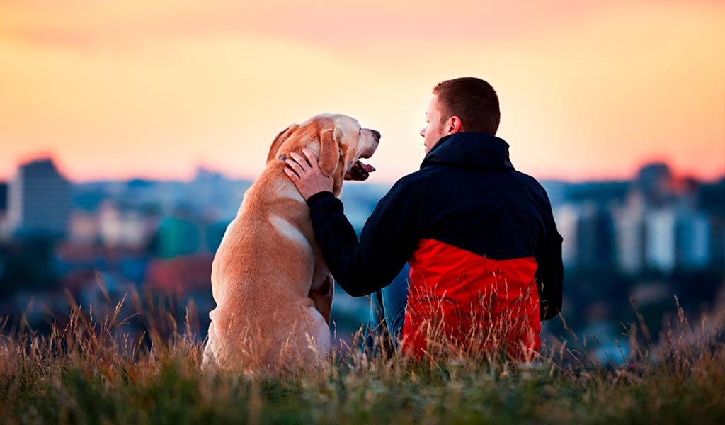 Con perros, hospital rehabilitaría alcohólicos