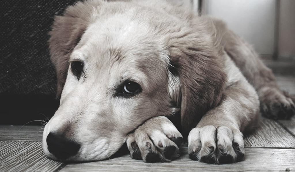 ¿Mascotas solas en casa? Cómo evitar que se queden tristes