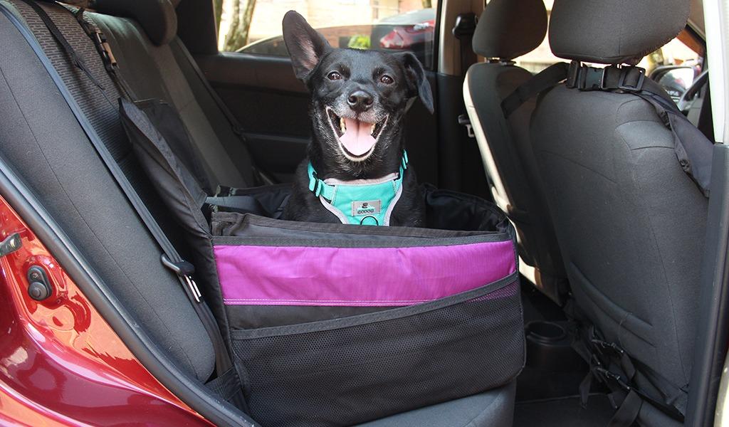Un perro, la razón de un emprendimiento familiar