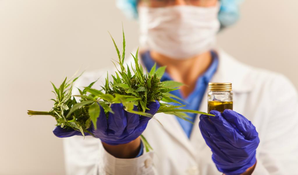 Inician operaciones de cannabis medicinal en Colombia