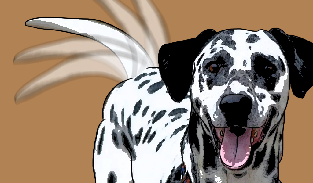 Funciones de la cola de los perros que usted desconoce
