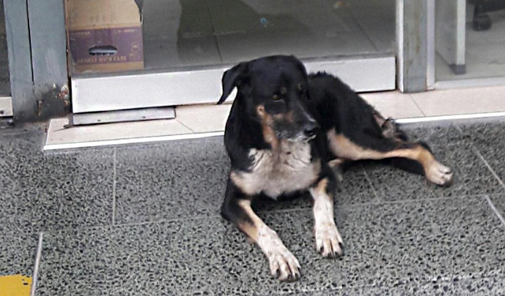 El perro que esperó a su amo en el hospital