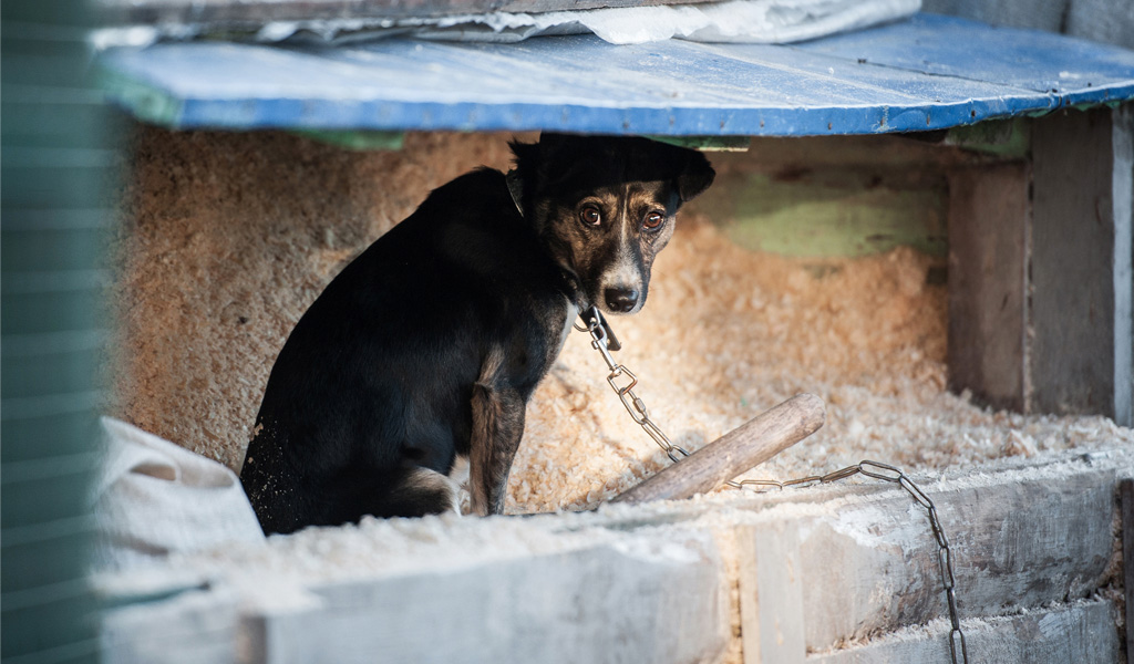 Los perros también sufren el conflicto venezolano