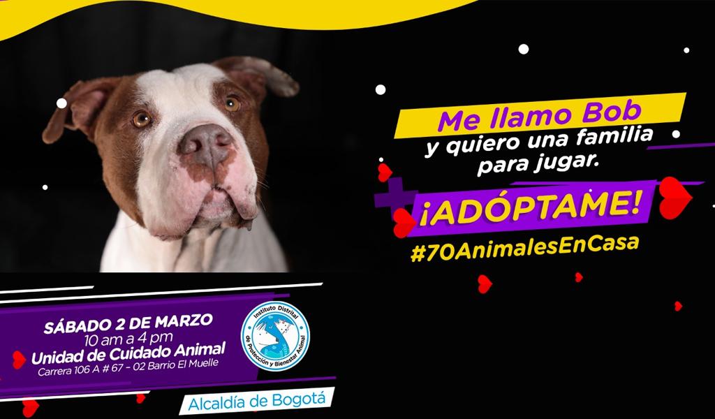 En Bogotá se prepara jornada de adopción
