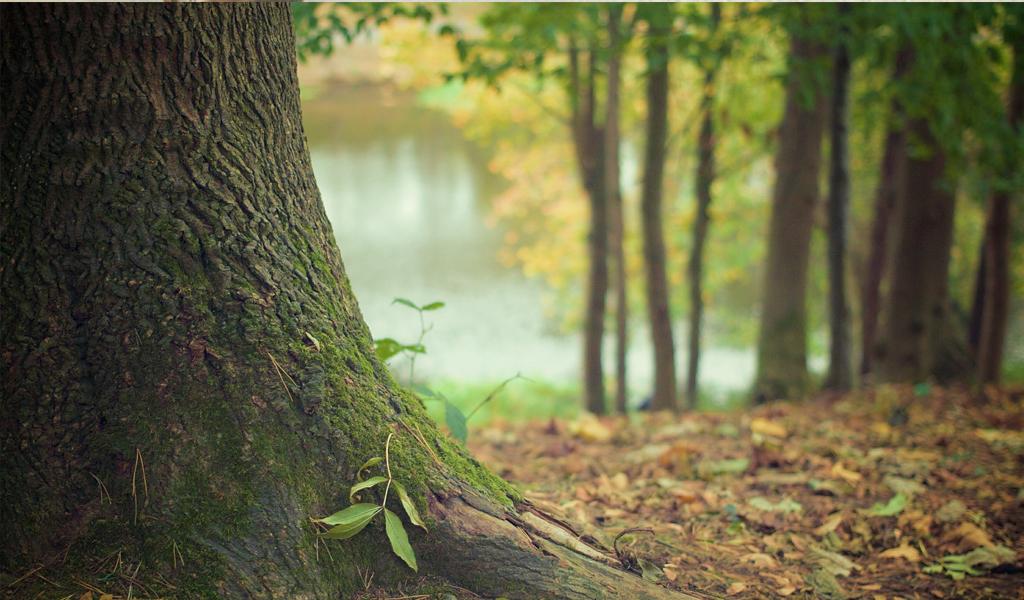 Bosques: una herramienta para el medio ambiente