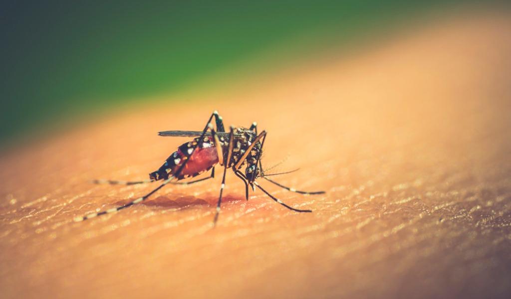 casos Dengue