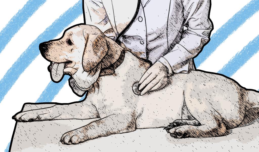 Enfermedades renales en perros y gatos