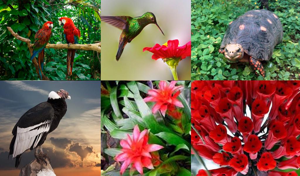 Descubren nuevas especies de fauna y flora en Vaupés