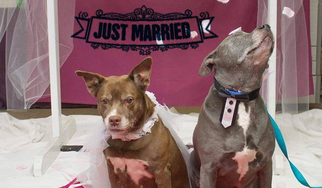 Los perros recién casados que cautivan Internet