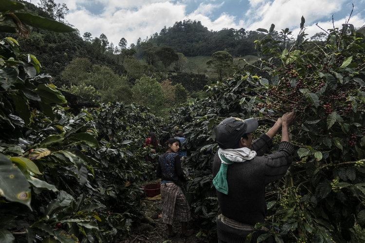 Migrantes que huyen del cambio climático
