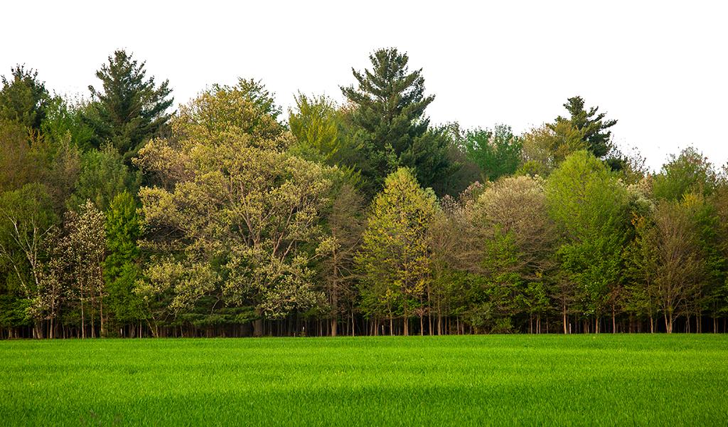 Proyecto busca sembrar ocho mil árboles en Cundinamarca