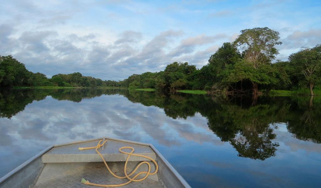 Acciones para detener la deforestación en la Amazonía