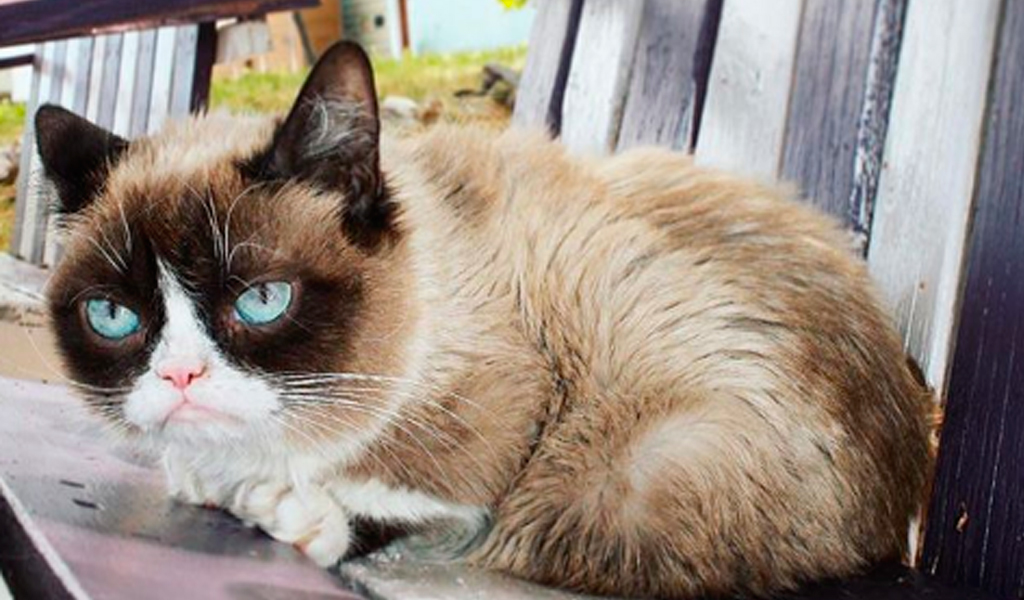 Grumpy cat muere