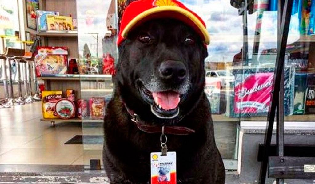 Negao, la mascota que trabaja en una gasolinera