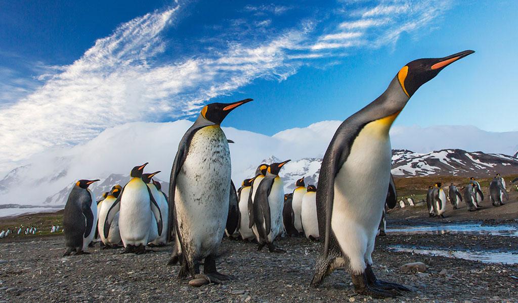 Pingüinos ayudan a preservar la vida en la Antártida