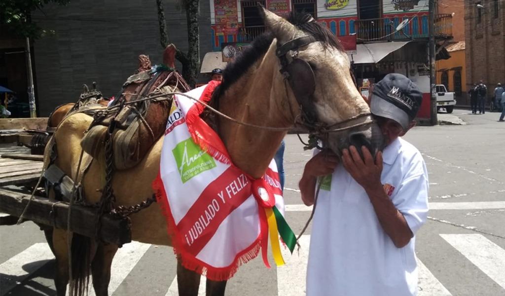 27 caballos fueron jubilados en Caldas, Antioquia