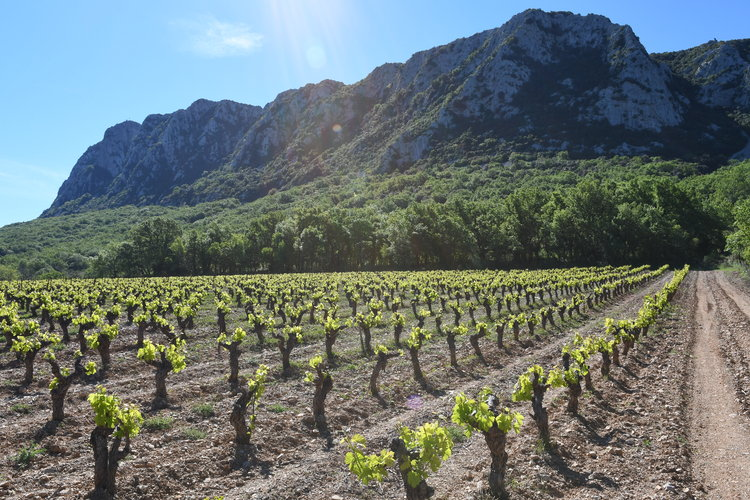 La historia de unos vinos que datan del Imperio Romano