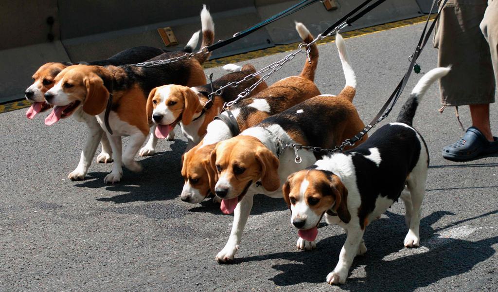 Perros pueden detectar el cáncer de pulmón