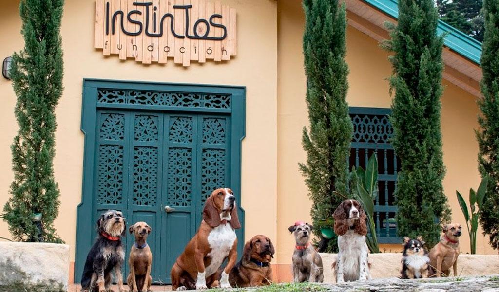Terapias asistidas por perros de difícil adopción