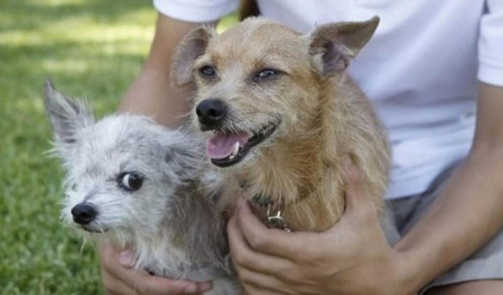 Corky, el perro que volvió a casa después de seis años