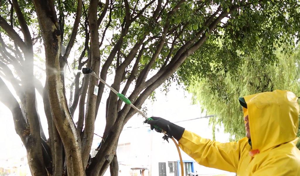 Alcaldía de Bogotá triplicó la atención a árboles enfermos