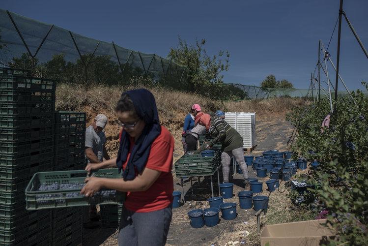 Explotación sexual detrás de los campos de fresas españoles