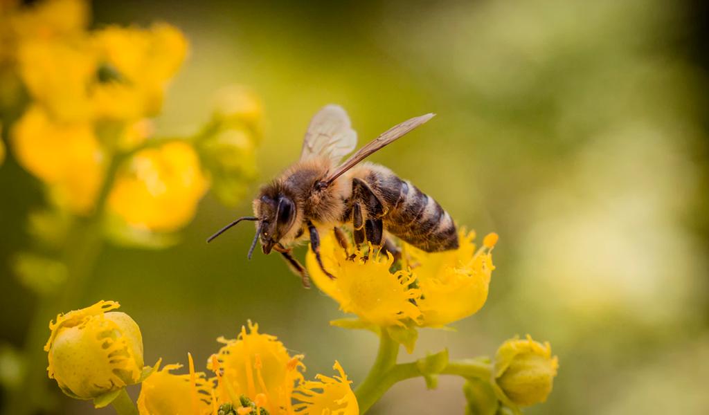 La iniciativa que busca proteger las abejas en Bogotá