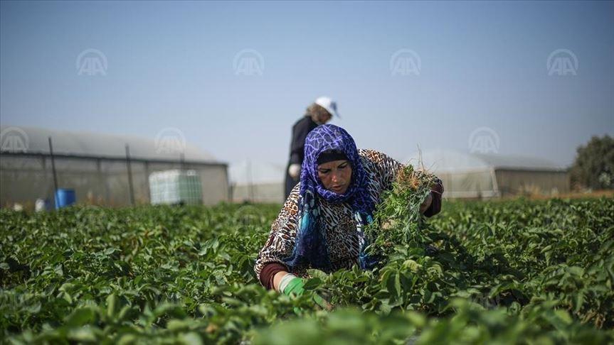 ¿Por qué todos dependemos de la Agricultura Familiar?
