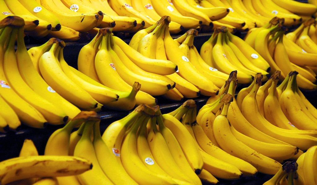 Más de 100 hectáreas de banano en cuarentena