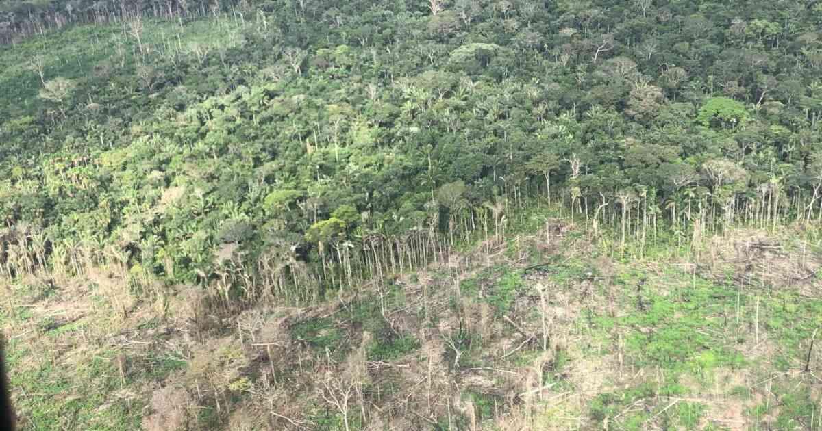 Fueron recuperadas 361 hectáreas de bosque en Chiribiquete